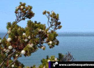 La camariña - alicante españa - Cantineoqueteveo