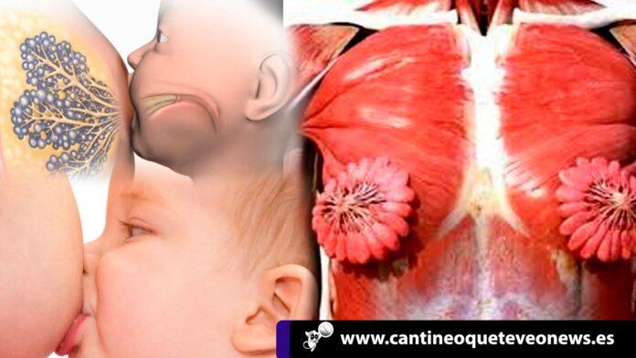 senos en forma de flor - senos femeninos - cuerpo humano femenino - Cantineoqueteveo News