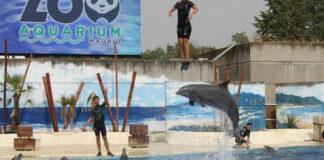 Cantineoqueteveonews - Investigana Zoo Aquarium de madrid por maltrato a delfines
