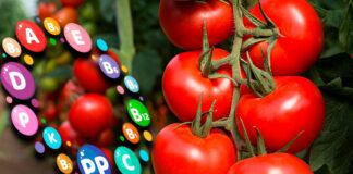 Cantineoqueteveonews - El tomate es rico en vitaminas y minerales y benefisioso para nuestra salud