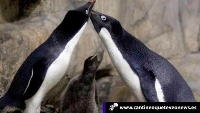 Cantineoqueteveo News - Los pingüinos gay juntos.