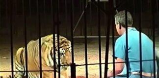Cantineoqueteveo News - Tigres-atacan matan domador