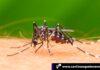 Cantineoqueteveo News - epidemia dengue honduras