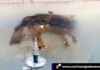 Cantineoqueteveo News - Perro congelado en Bolivia