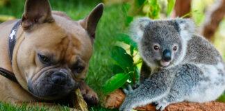 Cuidado de perros - Cantineoqueteveonews