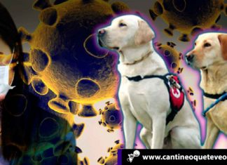 Perros a detectar el coronavirus - Cantineoqueteveonews
