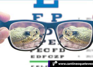la visión humana - Cantineoqueteveonews