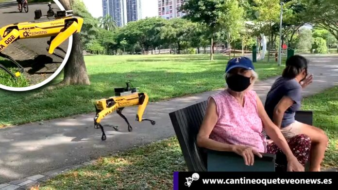 Perros robots - Cantineoqueteveonews