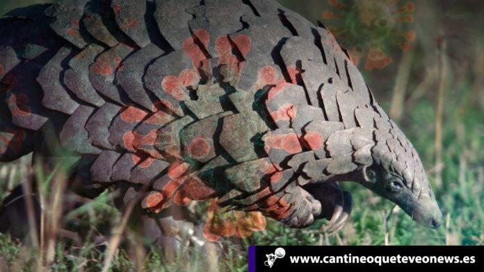Huésped animal - Cantineoqueteveonews