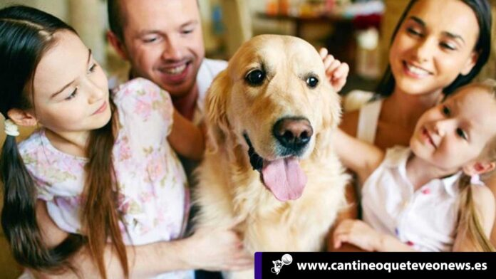 las mascotas - Cantineoqueteveonews