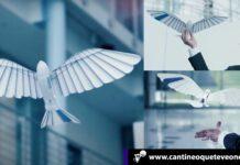 pájaro robot - CantineoqueteveoNews