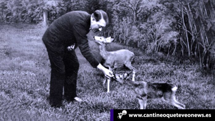 los animales - Cantineoqueteveonews