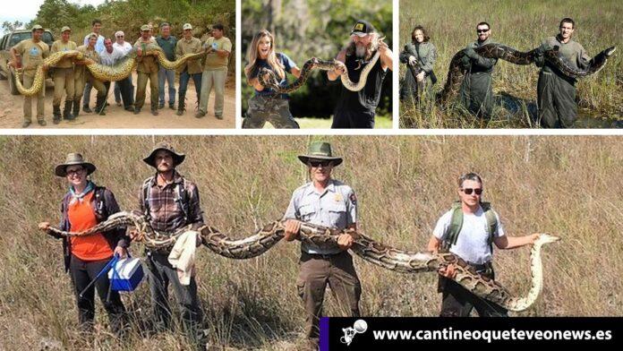 Python Bowl - Cantineoqueteveonews