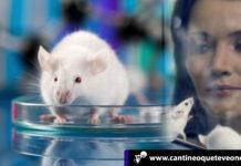 Ratones ciegos - Cantineoqueteveonews